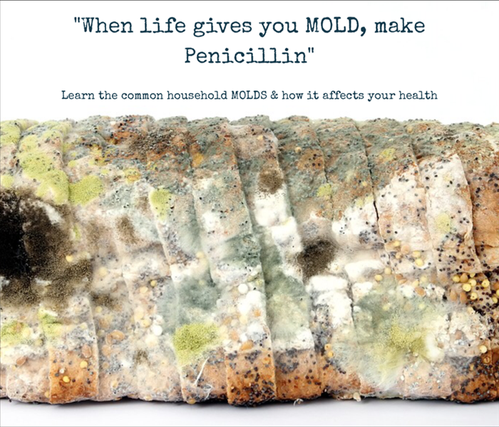 Mold Remediation Common Household Molds & Your Health
