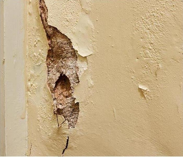 Why SERVPRO Palm Bay Mold Damage - Prevent Mold Spores From Spreading