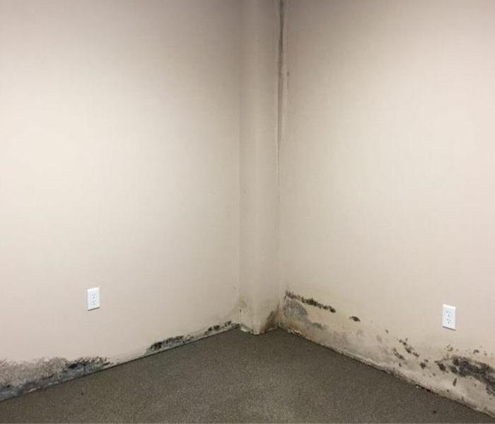 Mold on the wall near the floor in a commercial space