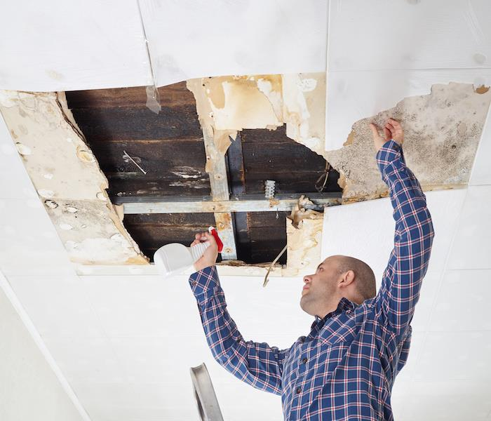 Mold Remediation Mold Cleanup Methods